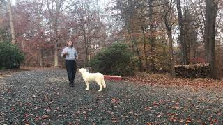 Great Pyrenees Puppy Training Winston Salem NC | Bailey