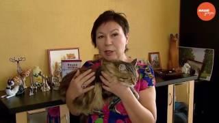 Как помочь кошке окотиться