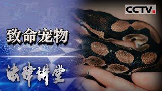 《法律讲堂(生活版)》 20201220 致命宠物  CCTV社会与法 - YouTube