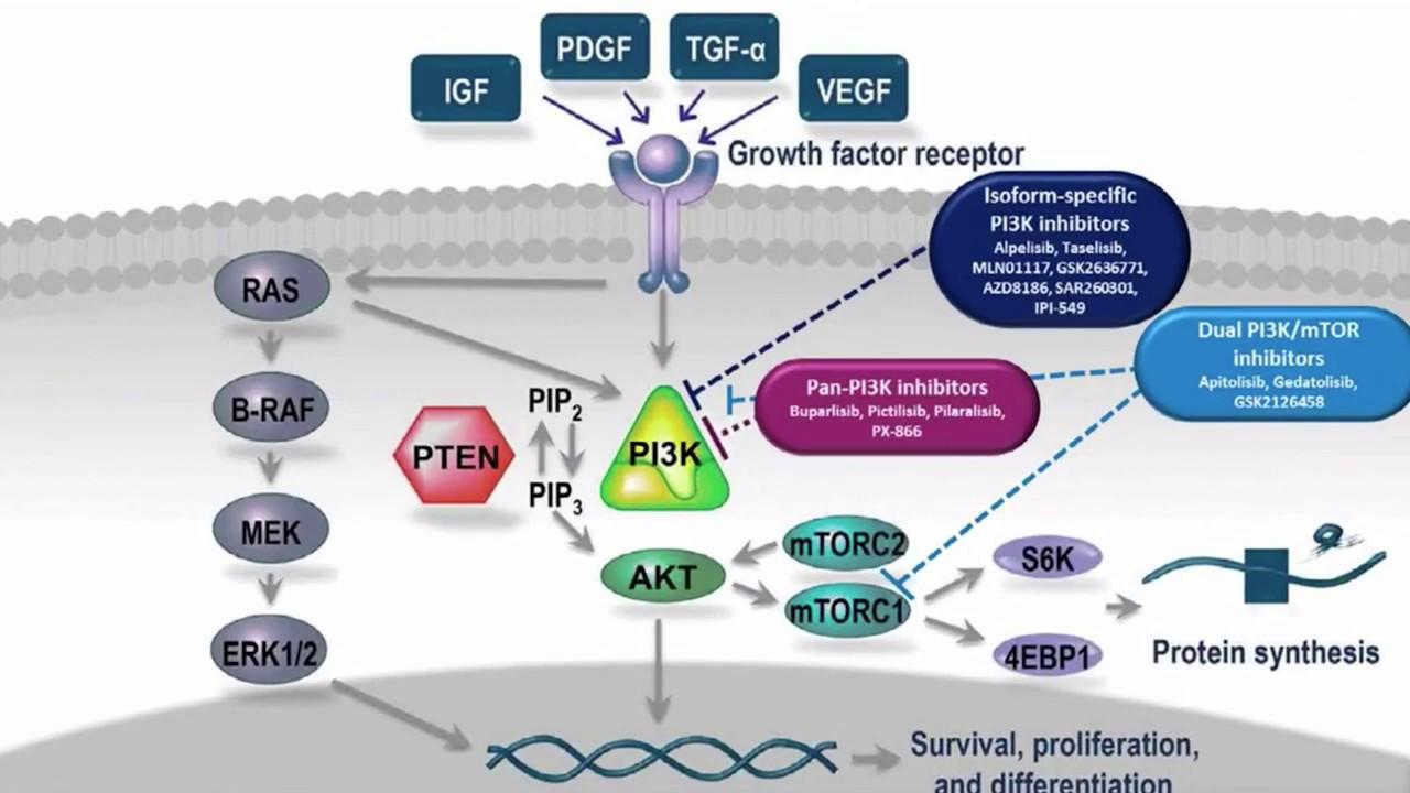 igf-ir inhibitor and keto diet