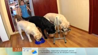Сухой корм для собак - Доброе утро - Первый канал(, 2013-02-08T15:57:47.000Z)