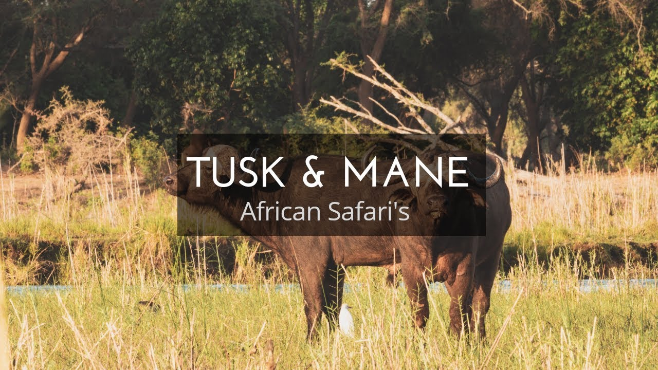 Tusk and Mane African Safaris | Lower Zambezi National Park, Zambia