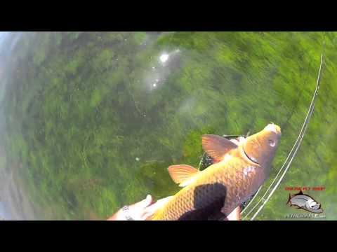 Carp Fishing Ловля карпа на нахлист