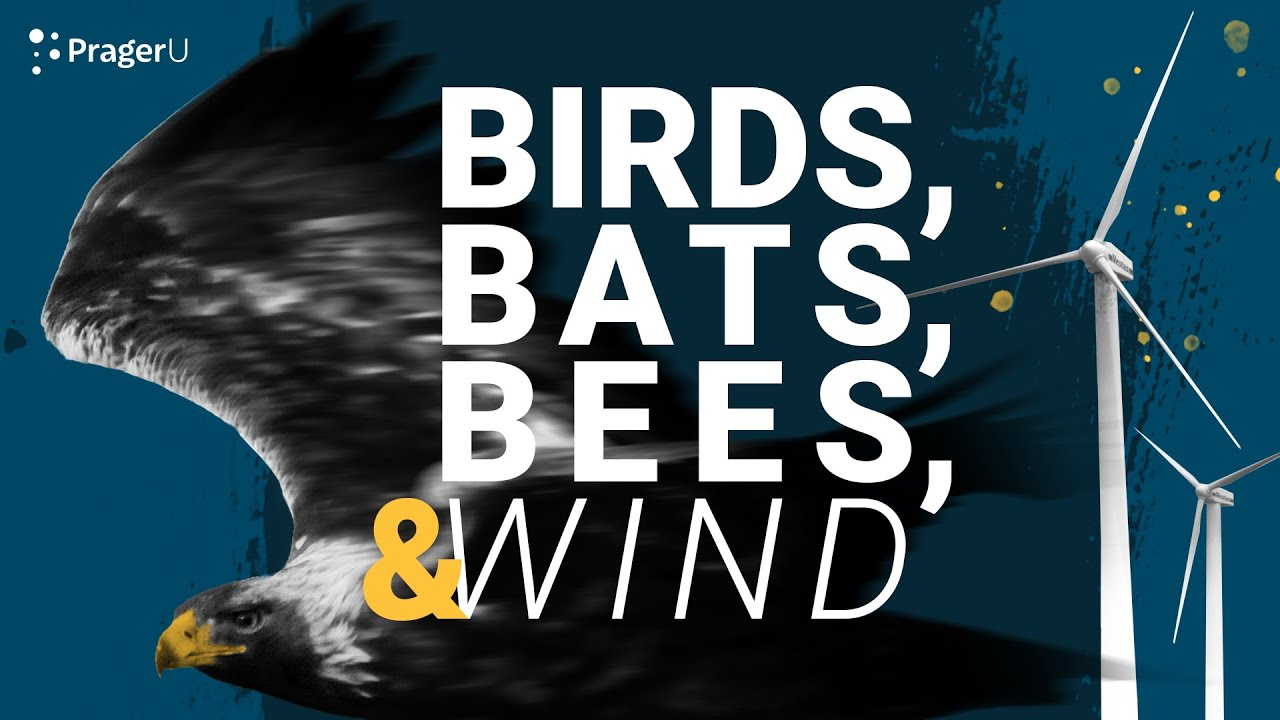 Wind Turbines Are Killing High-Conservation Birds