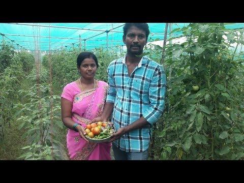 இயற்கை காய்கறி || natural vegetable farming