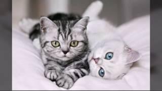 Подборка. Фото милых котиков).