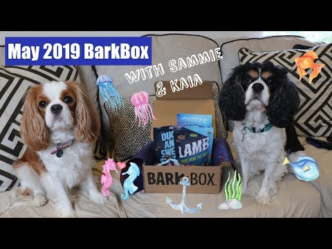 BarkBox Unboxing May 2019 | with Sammie & Kaia | Cavalier King Charles Spaniel