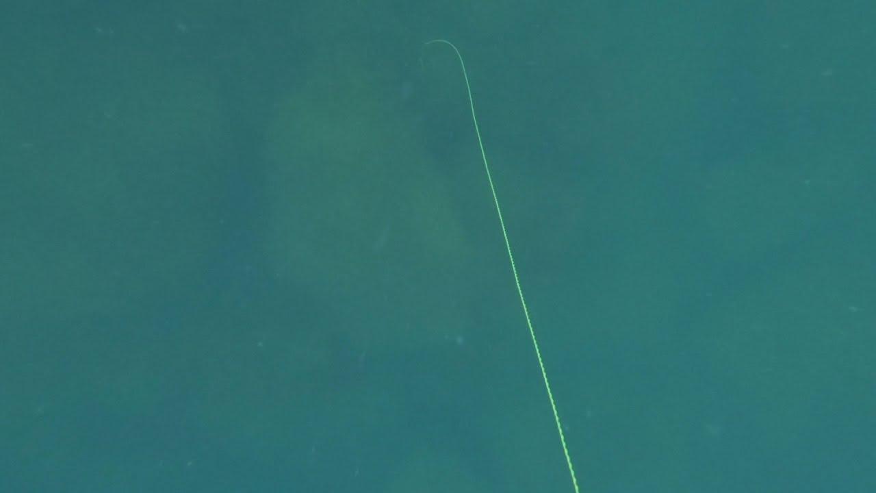Что может случится в охоте на горбыля.  Подводная охота в Черном море.