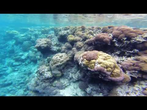 GoPro: Snorkeling / Free Diving - Solomon Islands. SWIMMING WITH SHARKS!!!