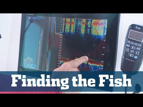 Finding The Fish  - Florida Sport Fishing TV