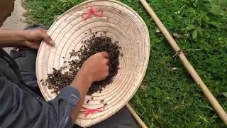 Cách phát hiện chúa ong trụ điện cực chất của săn bắt đồng nai-Tập 7