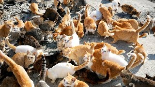How One Woman Saved the Cats on Japan's Cat Island