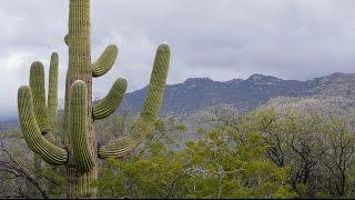 2.5 Plant Story: Cactus in Desert Urdu Hindi