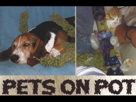 Stoner Throwback: Pets on Pot 2007