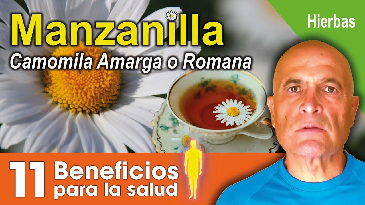 Manzanilla o Camomila Amarga o Romana 🌼.  11 Beneficios para la salud. 💜