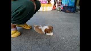 """プリティー ドッグ """"Lovely dog"""" Small Cute dog Abandoned dog dog Slo..."""