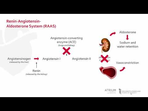 A Focus Series On Hypertension: ACE Inhibitors And ARBs