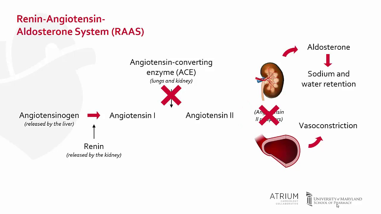 inhibidores de ace vs arbs diabetes mellitus