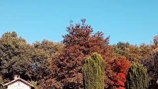 L' automne au bois Marquis de Vernioz, Isère, France.