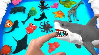 Wild Animals For Kids Learning Name of Zoo Animals Toy Collection - Toys For Kids