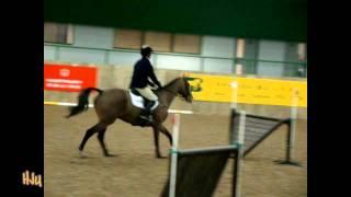 HorseJunkiesUnited.com - 2/2 David O