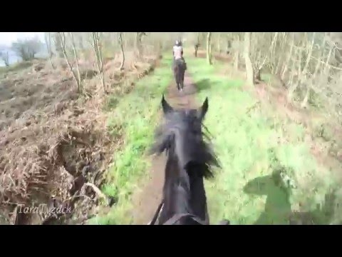 GoPro Horse Riding: Hacking in Sherwood Forest