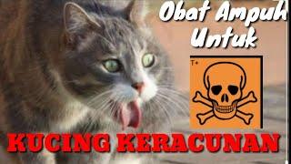 Cara terbaik mengobati kucing keracunan