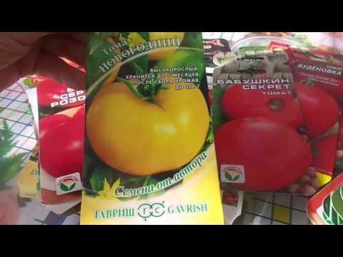 Сроки и отличный способ посева проверенных сортов томатов на рассаду пророщенными семенами.