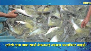 Situation of Fish Farming in Nepal | Documentary | Video Profile | 2016