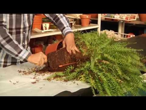 El jardinero en casa hortensias doovi for Jardinero en casa