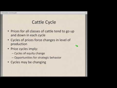 Cattle Marketing: Cash Market Basics