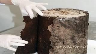 Beetles for Methyl Bromide Research