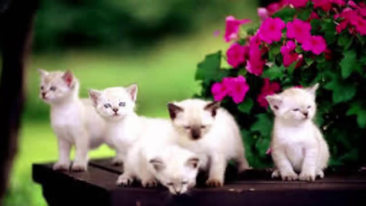 cute cat pictures cute cat pictures 2017