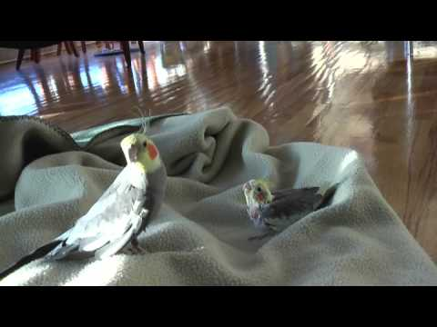 Boogie Bird and the Squeaky Baby - YouTube