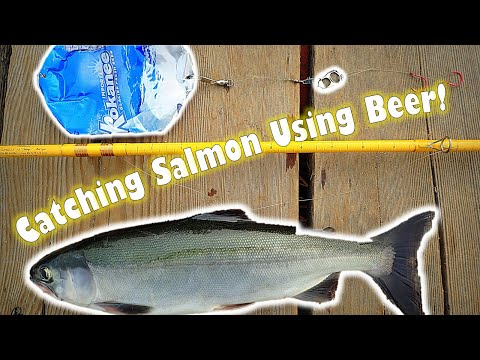 Catching Salmon Using Beer