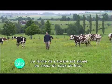 Un élevage laitier bio avec transformation à la ferme