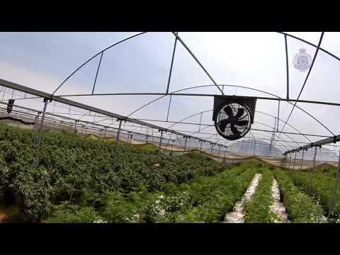 Queensland Police Release Aerial Footage of Huge Weed Crop Worth Millions