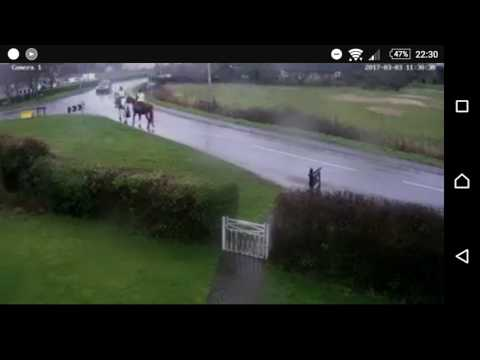 Horse and rider gets hit by car