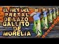 ¡GALLITO DE MORELIA EL REY DEL PRETAL DE LAZO!