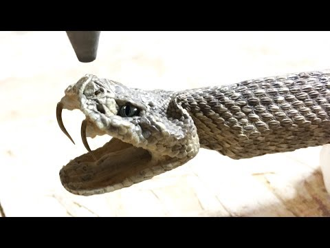 Rattlesnake Cut In Half With 60000 PSI Waterjet -  whats inside a rattle snake