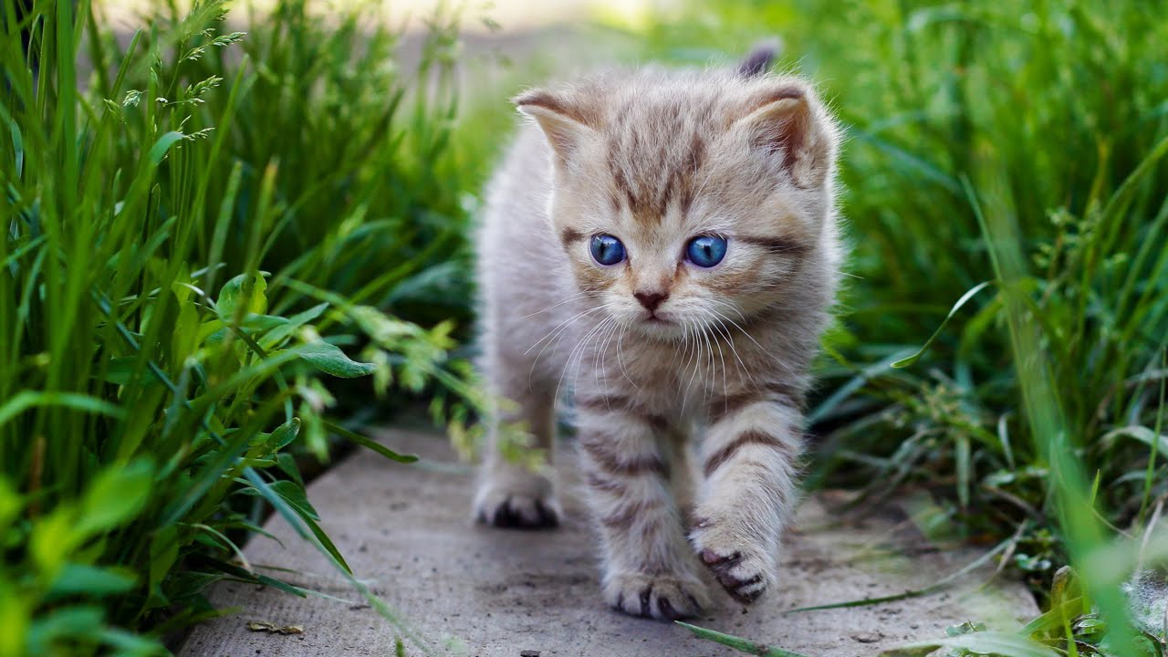 poze pisici mici part 2 - YouTube