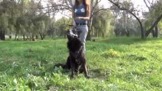 German Shepherd Dog Training Equipment