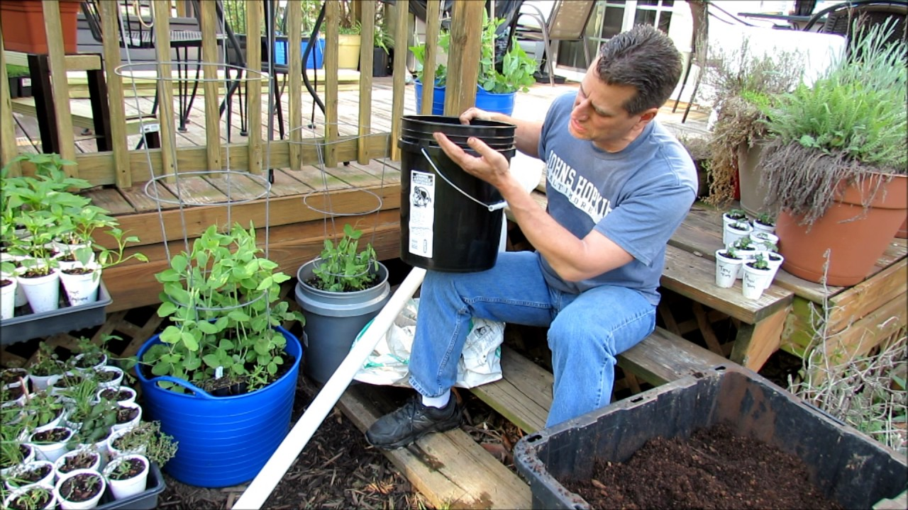 Simple 5 Gallon Watering Set Ups For Container Tomatoes Plants Know Your Climate Respond 1of2