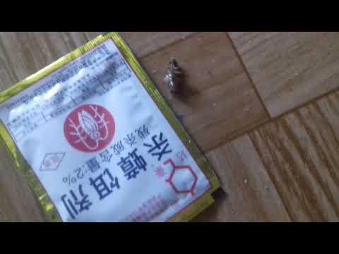 Как отравить тараканов Отрава от тараканов с AliExpress