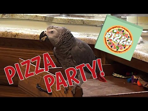 Einstein is having a Pizza Party! You're Invited!