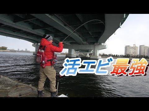 関西最強の釣りエビ撒き釣りは真冬でも釣れる
