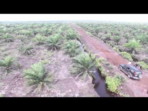 Okupasi Hutan Produksi Pada Lahan Gambut Untuk Ditanami Sawit di Siak Riau (1)