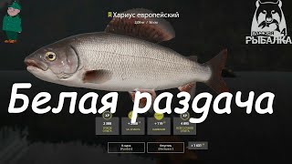 Русская рыбалка 4 Спиннинг на Белой Форель и хариус на ультралайт в Птичьих зарослях