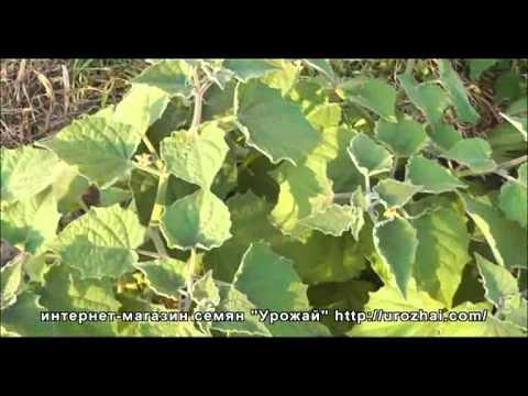Земля/ почва/ грунт для рассады томатов, перцев и баклажанов .