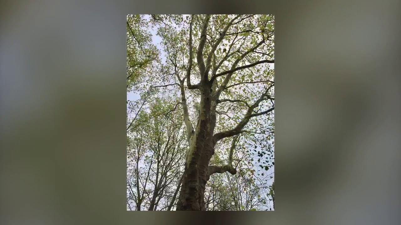 Leonhardsfriedhof Bäume HD